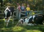 Ards Dairy Farm Agritourism