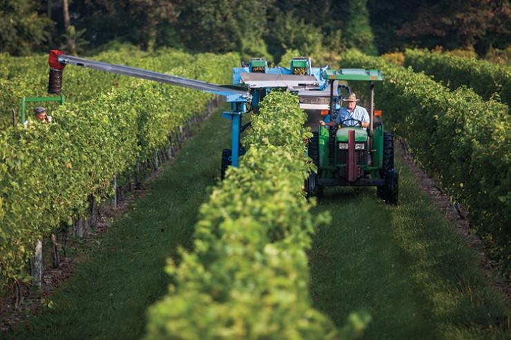 New Jersey wine