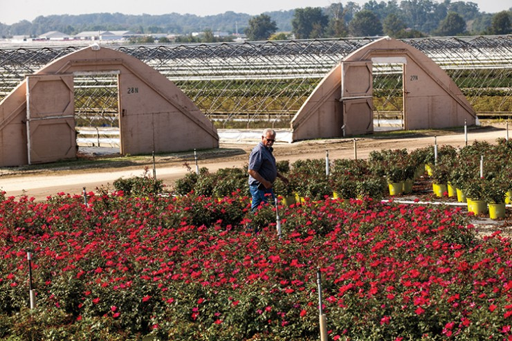 New Jersey horticulture