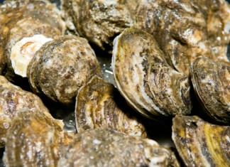 New Jersey shellfish