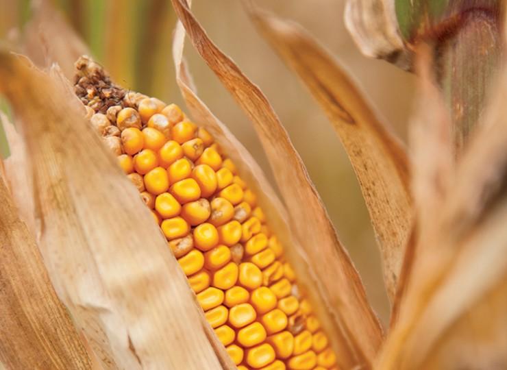 The Whole Kernel: Cargill in Nebraska   Farm Flavor