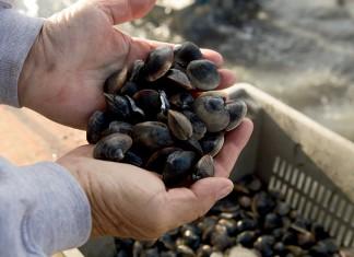 Virginia Aquaculture- Ballard Fish and Oyster Company