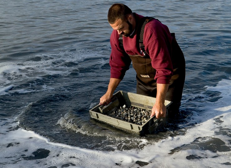 Virginia Aquaculture- Ballard Fish and Oyster Company