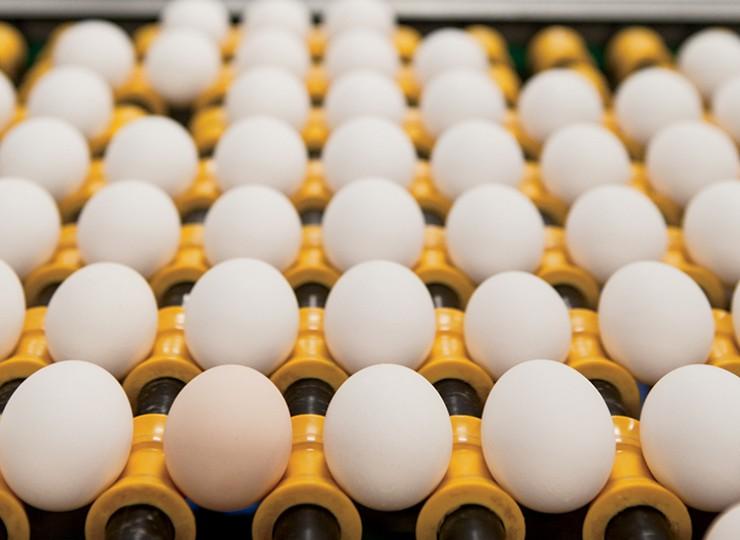 Trillium Farms eggs