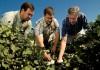 Cotton farmers in Arkansas