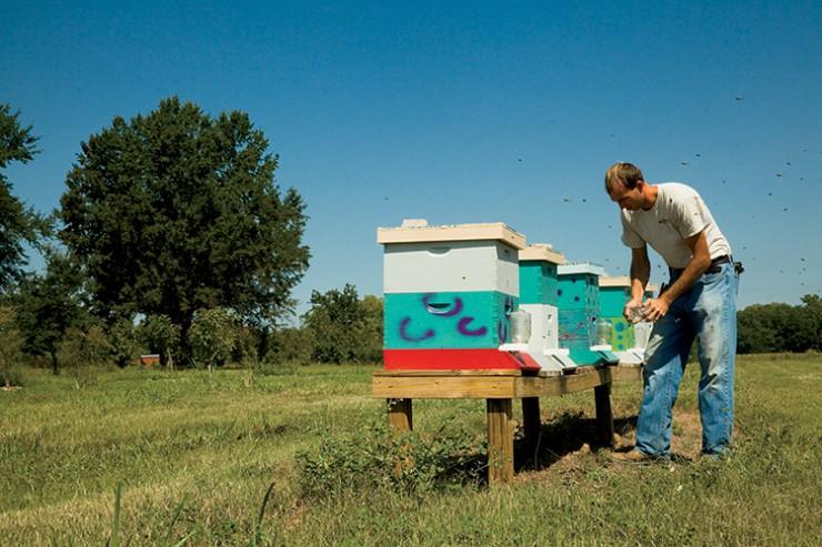 Bemis Tree Farm in Little  Rock Arkansas.