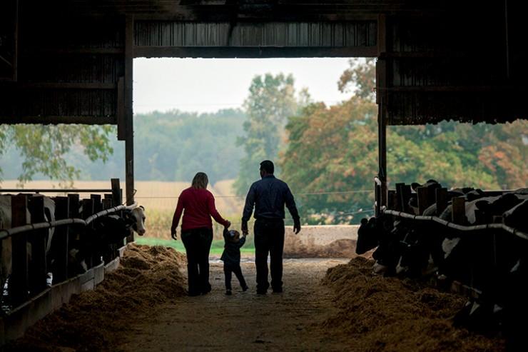 Animals & Livestock