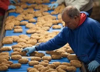 Michigan Potatoes