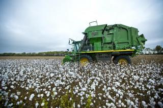 Corn & Cotton