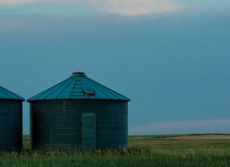 Wheat harvest in Western Nebraska.