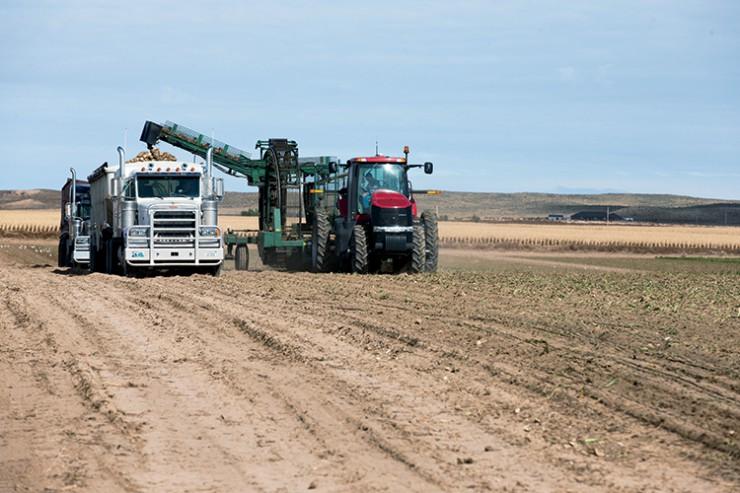 sugar beet harvester in Scottsbluff, Nebraska