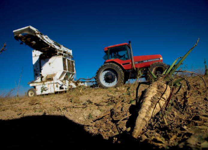 Sugar beet harvesting equiptment