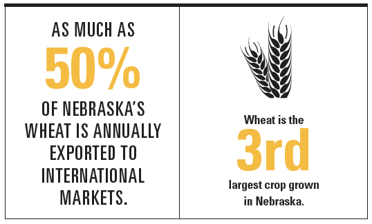 Nebraska Wheat Infographic