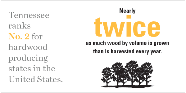 Tennessee Forestry Infographic