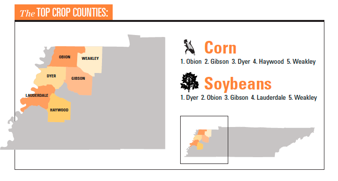 Tennessee grain infographic
