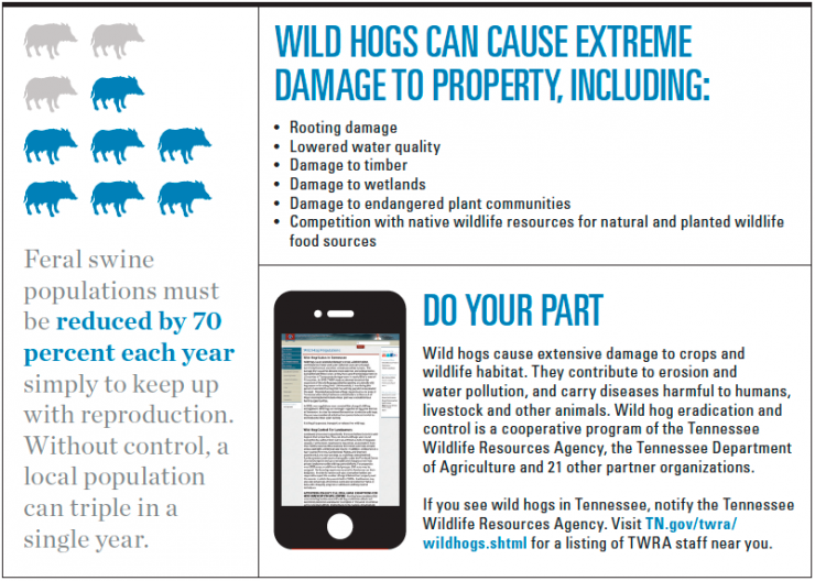 Wild hog infographic