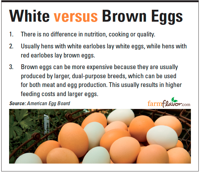 white vs. brown eggs