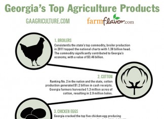 Georgia Top 10 Ag Commodities featured