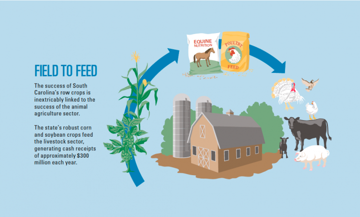 South Carolina Field to Feed Infographic