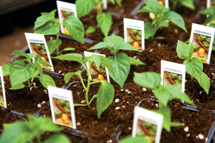 Genesis Growers