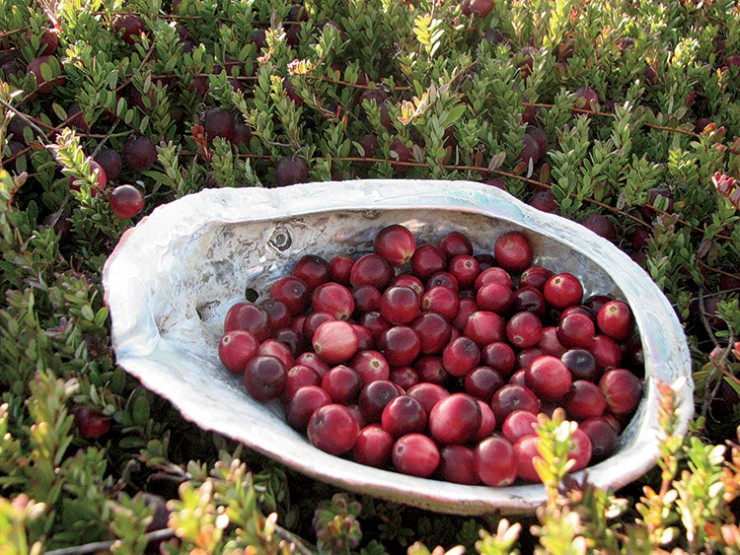 Oregon cranberries