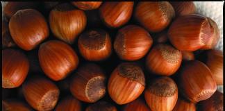 Oregon Hazlenuts