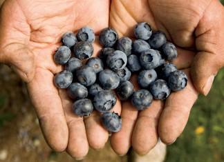 Oregon blueberries