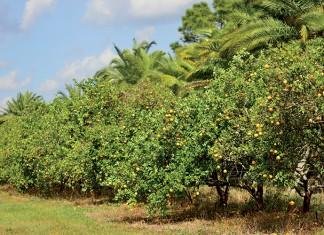 Florida Citrus Research