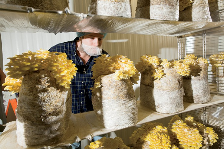 Kitchen Pride Mushrooms GO TEXAN brands