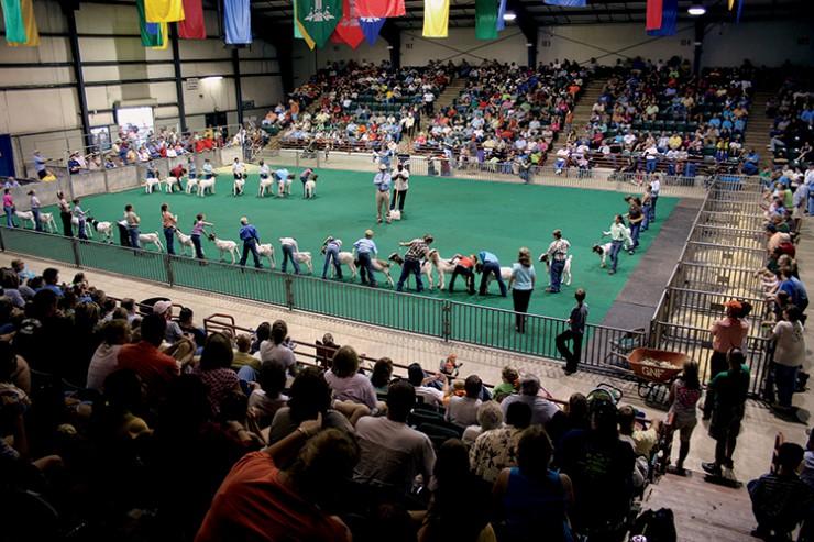 Georgia National Fair Junior goat show