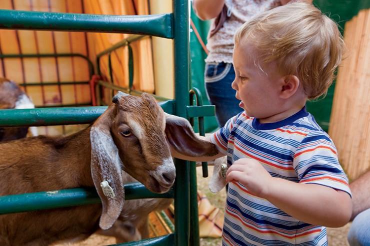 Georgia National Fair in Perry