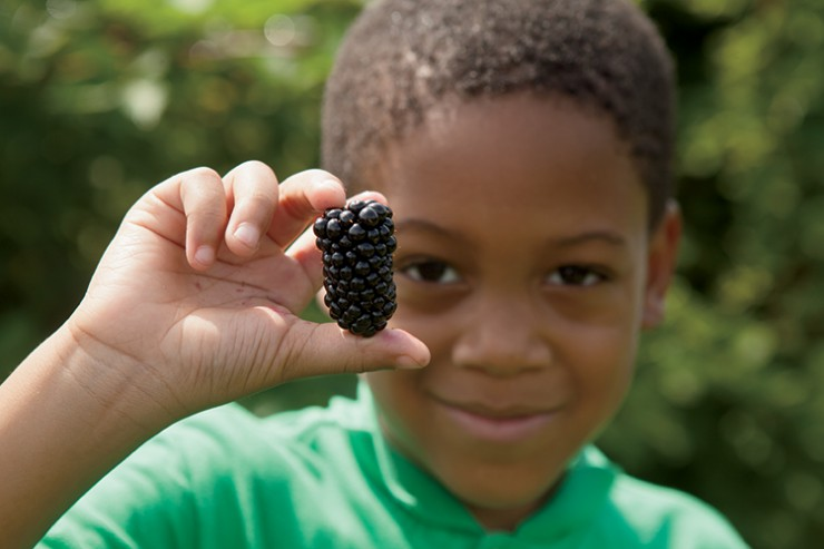 A child picks blackberries in McDonough, Georgia, Henry County.