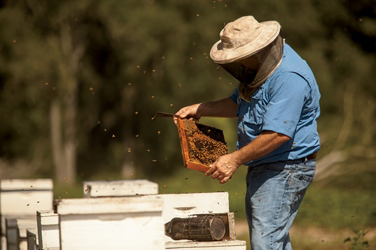 Ray Crosby works with hives at Weeks Honey Farm in Omega, Georgia, Tift County.