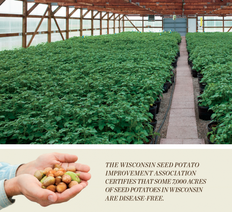 Wisconsin seed potato greenhouse