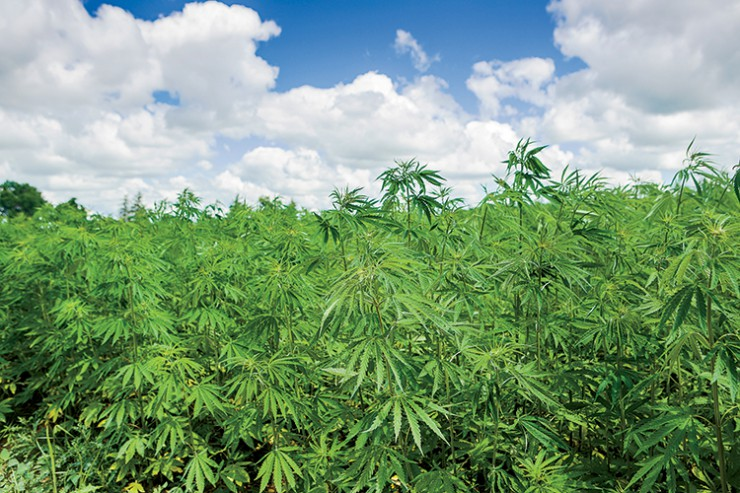 Industrial hemp can now be legally grown in Kentucky.