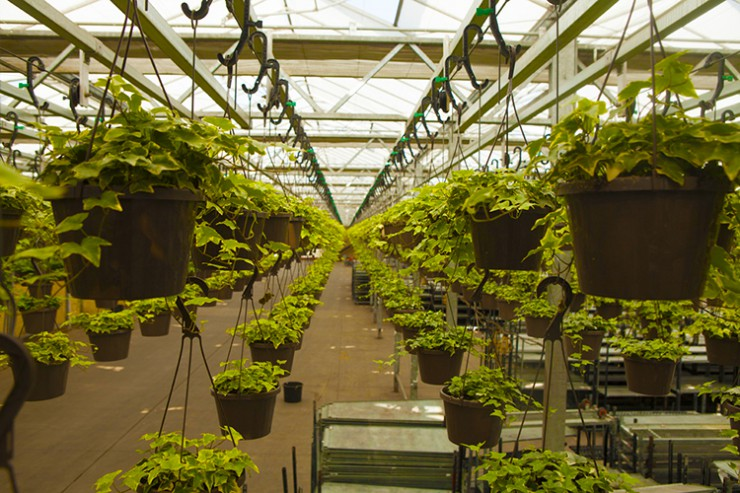 Green Circle Growers in Oberlin, Ohio