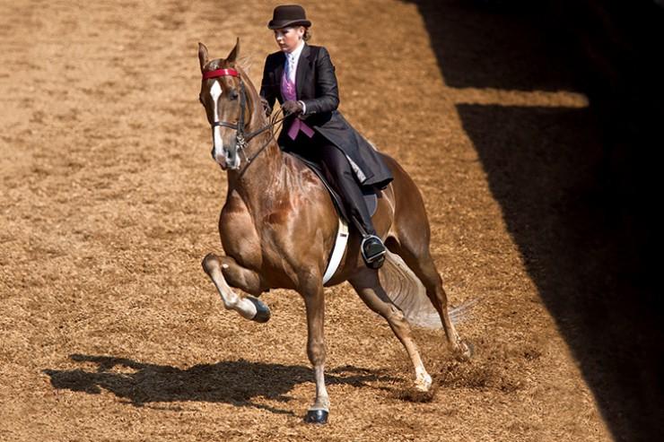 Lexington Junior League Charity Horse Show