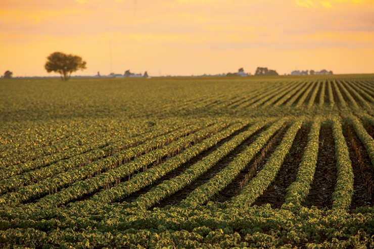 Mississippi Crop Consultants