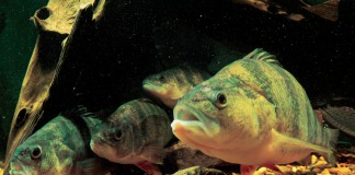 Bell Aquaculture