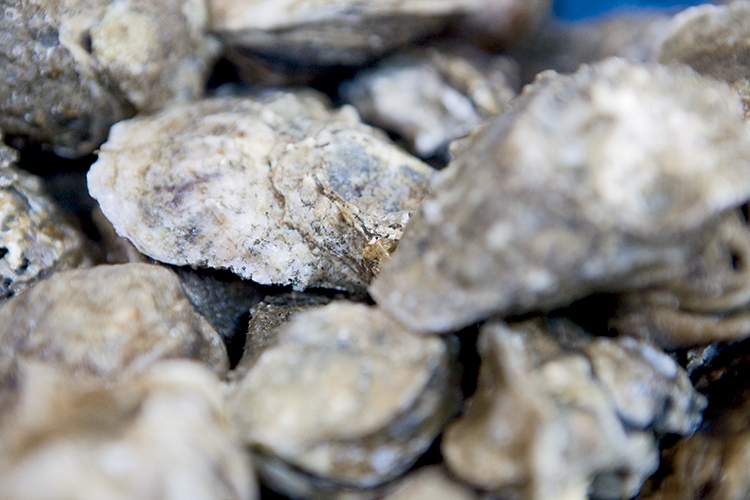 Crystal Seas Oysters uses irradiation to treat their raw oysters in order to have a safer, more consistent product.