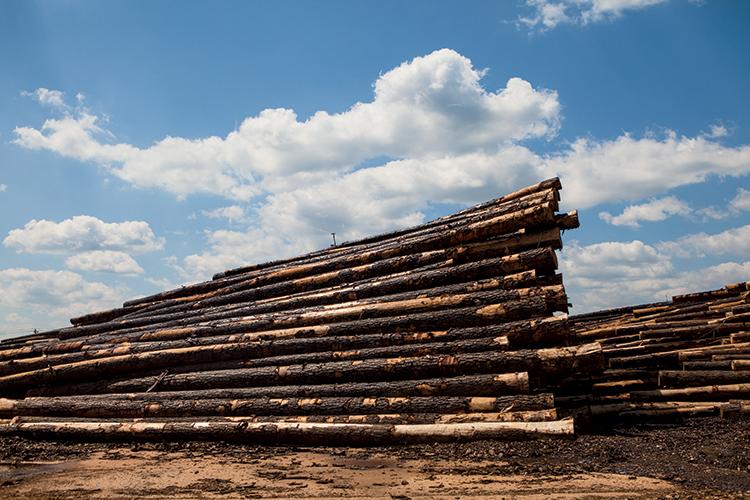 Mississippi Forestry