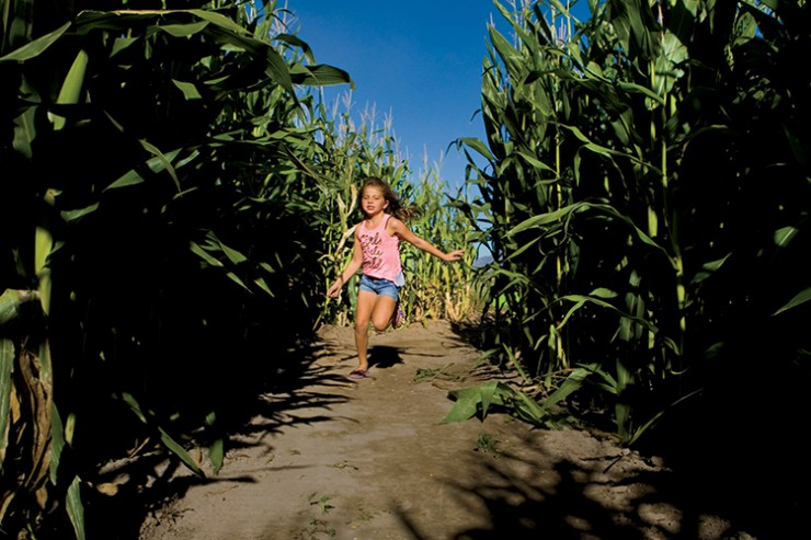 Black Island Farms has the largest corn maze in Utah, with 28 acres.