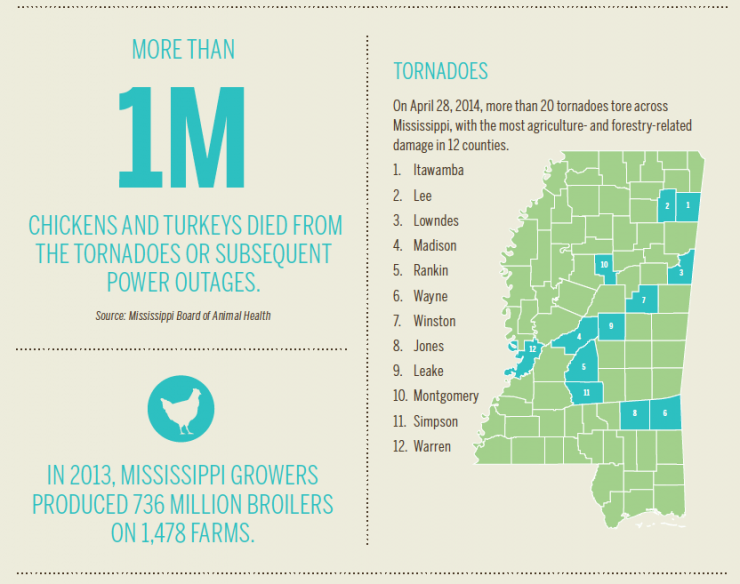 Mississippi Poultry [INFOGRAPHIC]
