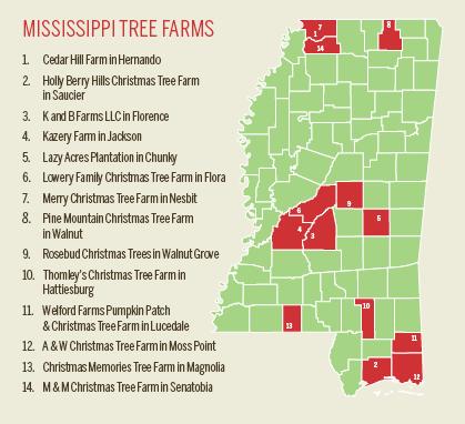 Mississippi Christmas Trees