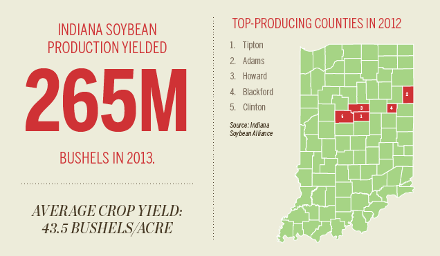 Indiana soybeans infographic