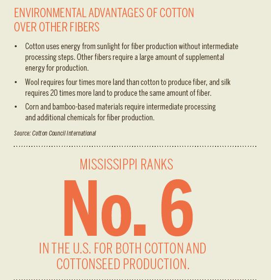 MS cotton graphic